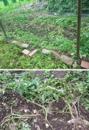 「網の下部のレンガがずれたフェンス」「荒らされたジャガイモ」